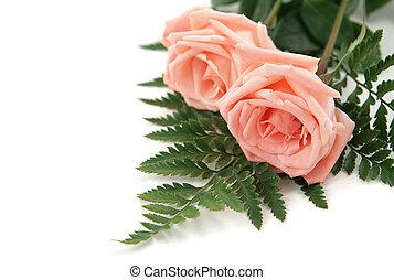 rosa subió, plano de fondo