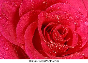 rosa subió, primer plano