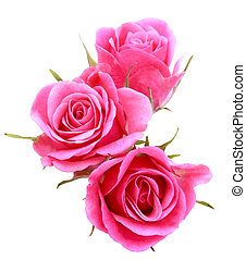 rosa subió, ramo de la flor, aislado, blanco, plano de fondo, recorte