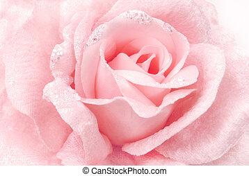 rosa subió, tela, textura