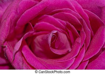 rosa subió, textura