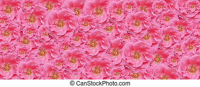 rosa subió, textura, papel pintado, floral, fondo