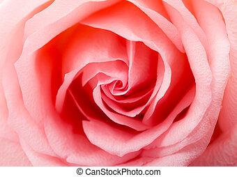 rosa, textura