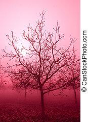 rosa, tono, árboles desnudos, nuez