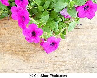 rosa, Trä, Blomstrar, gammal, bakgrund