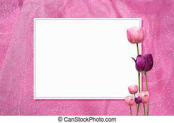 rosa, tulipán, marco
