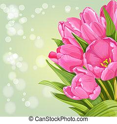 rosa, tulips, fondo