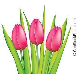 rosa, tulpen, bündel
