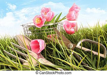rosa, tulpen, in, großes gras