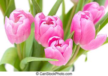 rosa, tulpen, weiß, hintergrund
