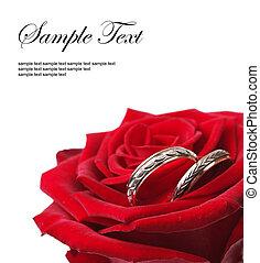 rosa vermelha, com, anéis