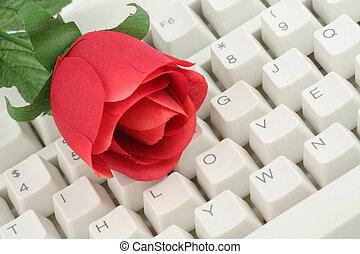 rosa vermelha, e, teclado