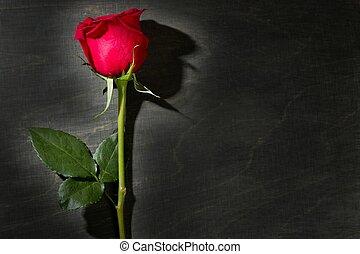 rosa vermelha, macro, sobre, escuro, pretas, madeira
