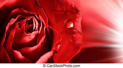 rosa vermelha, pétalas, com, água, gotas, e, raios, de,...