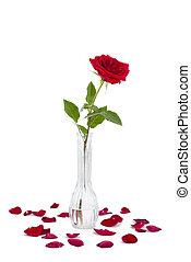 rosa, vermelho, vaso