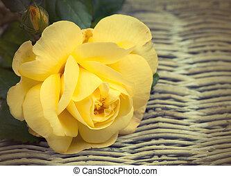 rosa, vime, fundo, amarela, vindima