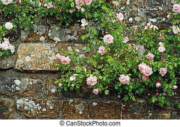 rosa, wand, stein, altes , rosen
