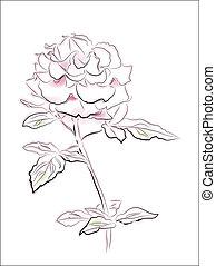 rosa, weinlese, abbildung, rose