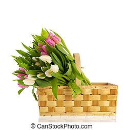 rosa, y, blanco, tulipanes