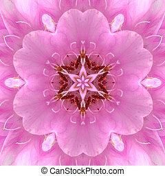 rosafarbene blume, zentrieren, konzentrisch, mandala,...