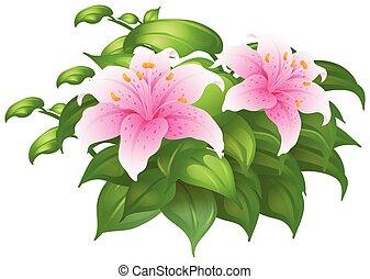 rosafarbene lilie, busch, blumen, grün