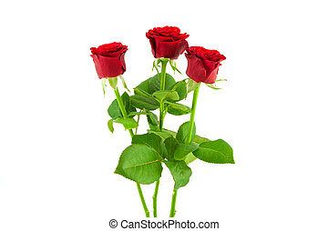 rosas, 3, fundo branco, vermelho