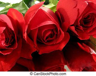 rosas, 3, vermelho