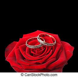 rosas, anéis, vermelho, casório