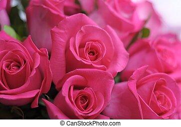 rosas, belleza