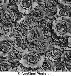 rosas, branca, experiência preta