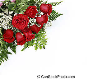 rosas, branco vermelho