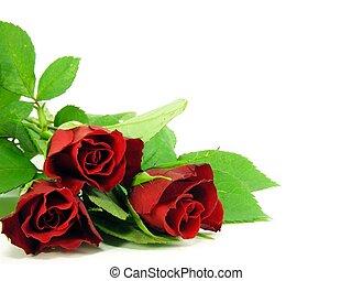 rosas, branco vermelho, fundo