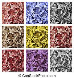 rosas, composição