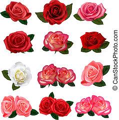 rosas, conjunto, vector., fondo., hermoso, blanco