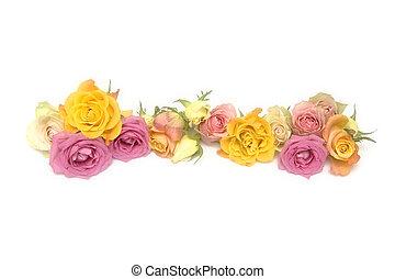 rosas cor-de-rosa, amarela