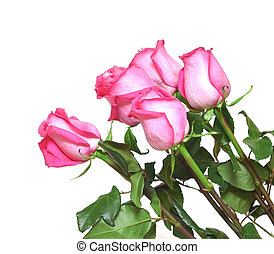 rosas cor-de-rosa, branca, buquet
