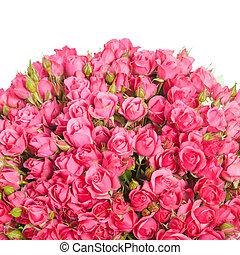 rosas cor-de-rosa, branca, isolado, fundo