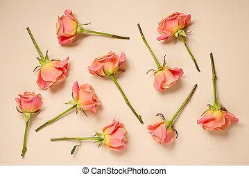 rosas cor-de-rosa, experiência bege