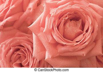 rosas cor-de-rosa, flores, -, fundo