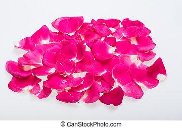 rosas cor-de-rosa, flowers., fundo, pétalas