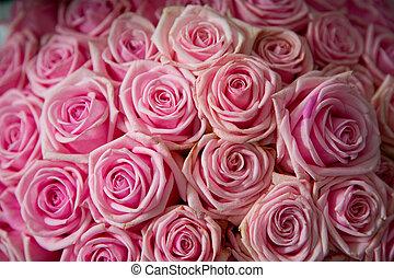 rosas cor-de-rosa, fundo