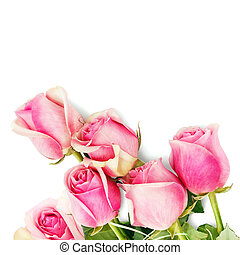 rosas cor-de-rosa, fundo branco