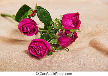 rosas cor-de-rosa, lona, multa