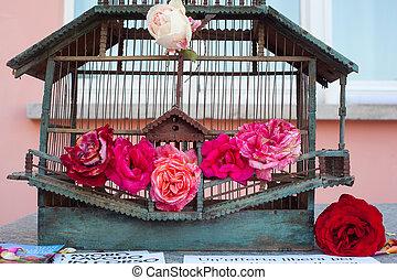 rosas, dentro, enjaule pájaro