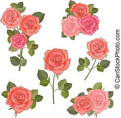 rosas, design., buquês, cobrança, seu