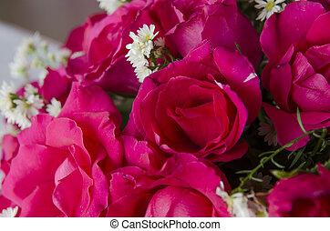 rosas, dia, valentine