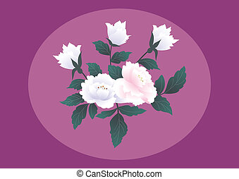 rosas, Extracto, Plano de fondo