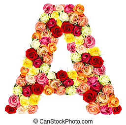 rosas, flor, um, alfabeto
