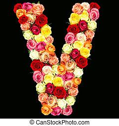 rosas, flor, v, alfabeto