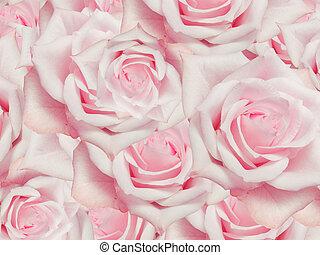 rosas, flores, arriba, plano de fondo, cierre